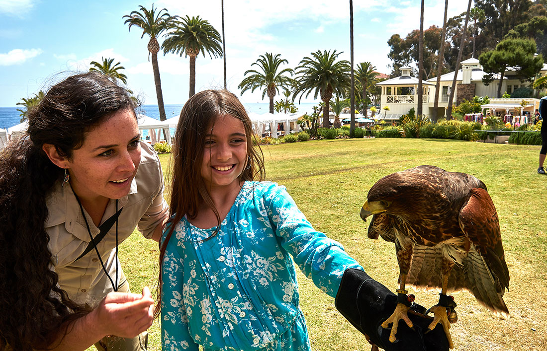 Falconry Experience - Catalina Island